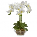orchid plants to philippines
