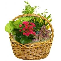 send blooming dish garden to philippines