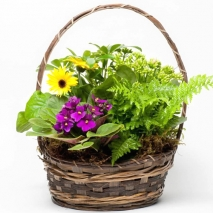 send blooming plant basket to philippines