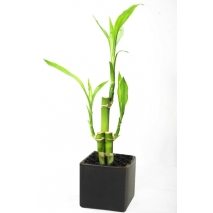 spiral bamboo pot to philippines