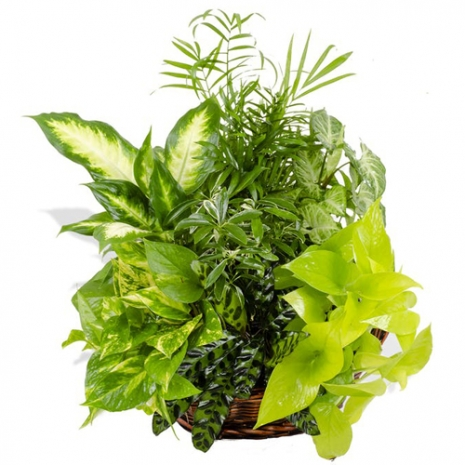 send exotic plant mixed basket to philippines