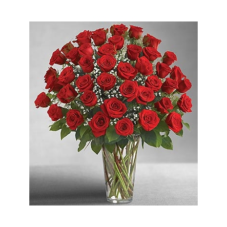 Send 2 dozens red rose to Philippines